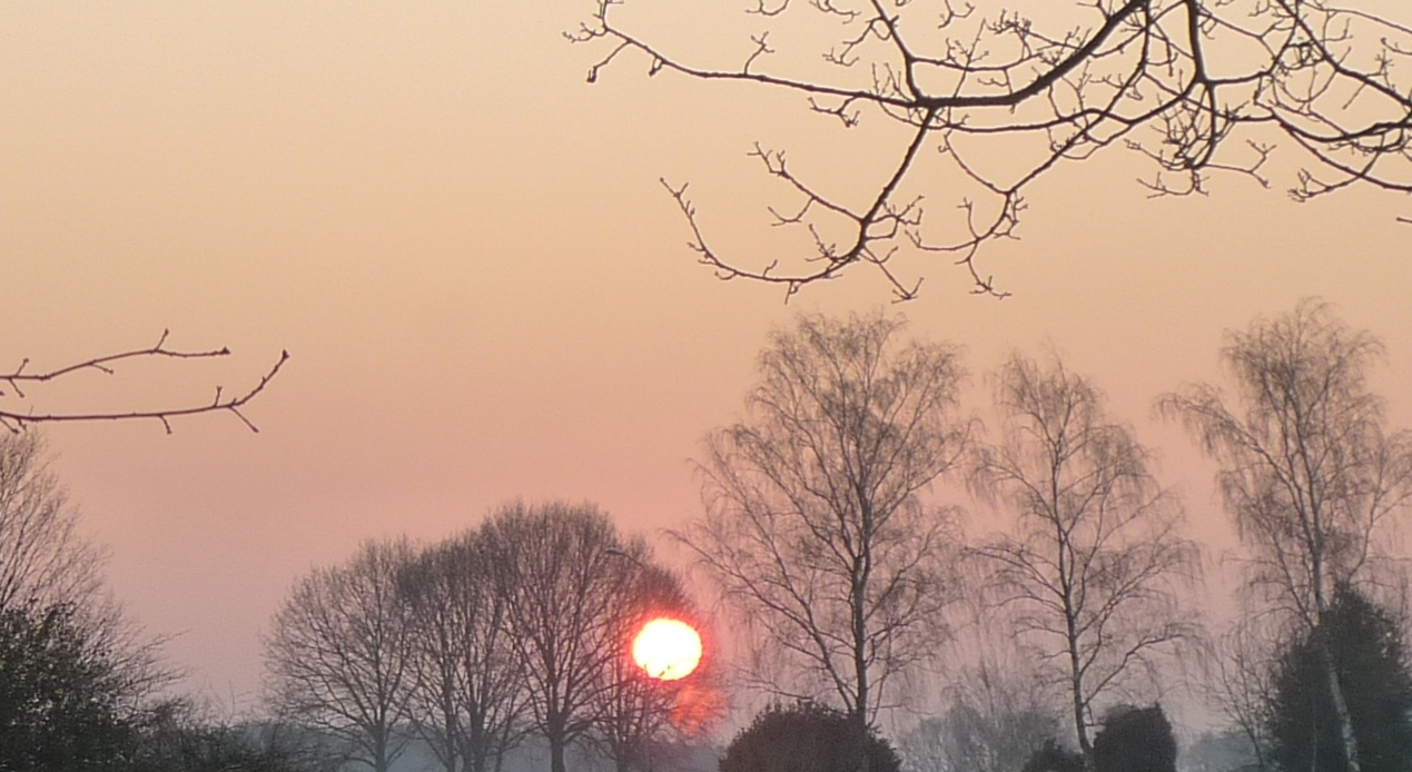sun burning through trees