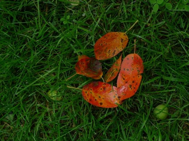 autumn in Summer