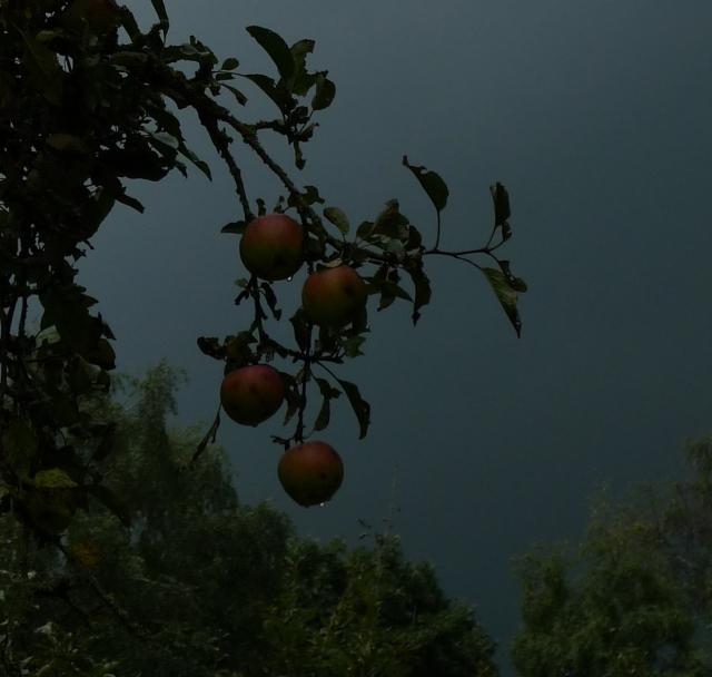 storm apples