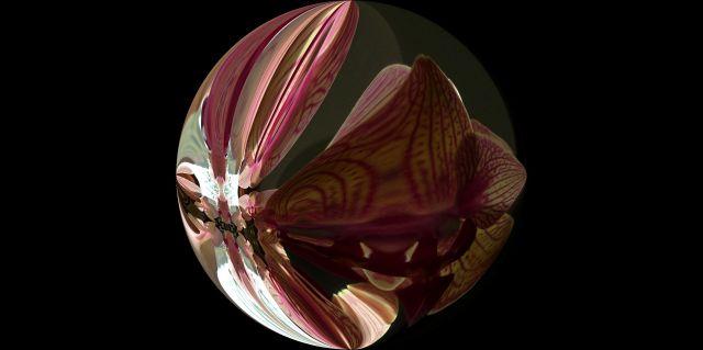 thur 31 10 13 003 orchid warp round