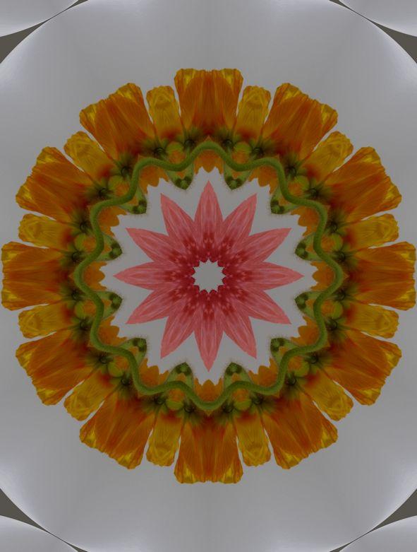 poppy 3 017rshadowrmin 6079185